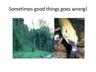 Sometimes good things goes wrong!