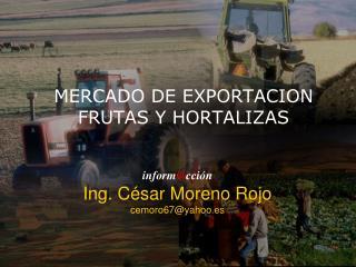 MERCADO DE EXPORTACION FRUTAS Y HORTALIZAS