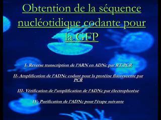 Obtention de la séquence nucléotidique codante pour la GFP