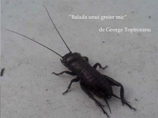 """ Balada unui greier mic ""                        de George Top î rceanu"