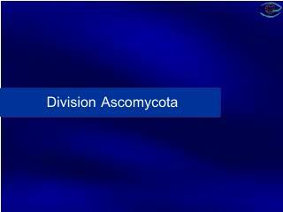 Division Ascomycota