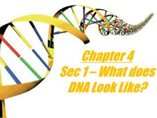 Chapter 4 Sec 1 – What does DNA Look Like?