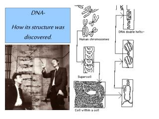 DNA- How its structure was discovered.