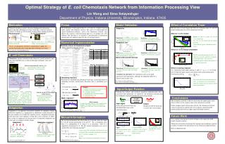 Optimal Strategy of  E. coli  Chemotaxis Network from Information Processing View