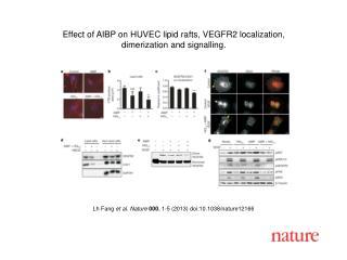 Lh Fang  et al. Nature  000 , 1-5 (2013)  doi:10.1038/nature12166