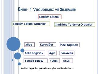 Ünite- 1 Vücudumuz ve Sistemler