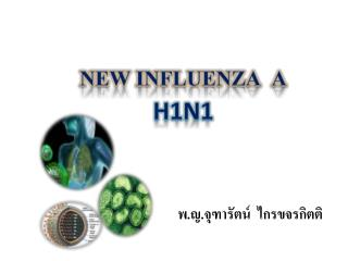 New Influenza  A H1N1