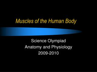 Muscles of the Human Body