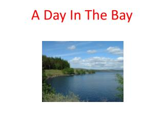 A Day In The Bay