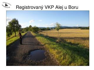 Registrovaný VKP Alej u Boru