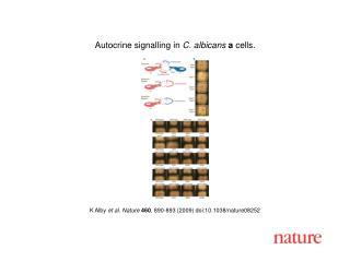 K Alby  et al. Nature 460 ,  890 - 893  (2009) doi:10.1038/nature08 252