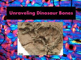 Unraveling Dinosaur Bones
