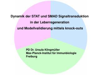 Dynamik der STAT und SMAD Signaltransduktion  in der Leberregeneration