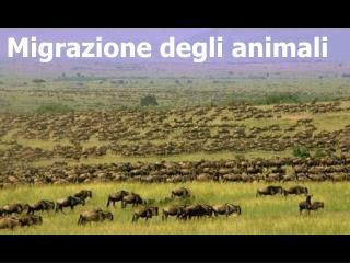 Migrazione degli animali