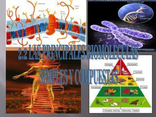2.2 LAS PRINCIPALES BIOMOLÉCULAS  SIMPLES Y COMPUESTAS
