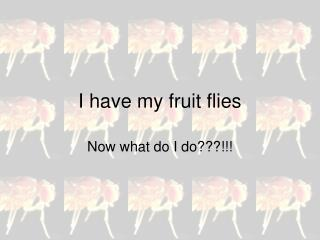 I have my fruit flies