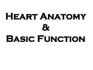 Heart Anatomy   Basic Function
