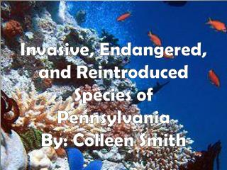 Invasive, Endangered, and Reintroduced Species of Pennsylvania  By: Colleen Smith