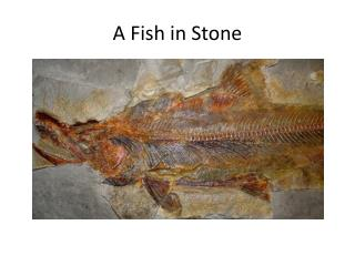 A Fish in Stone