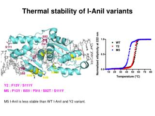 Thermal stability of I-AniI variants