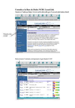 Consulta a la Base de Dades NCBI: LocusLink