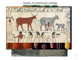 Genetics, the oldest branch of Biology