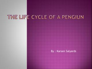 The Life Cycle of A  Pengiun