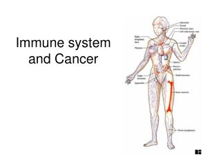 Immune system and Cancer