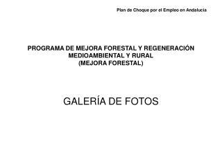 PROGRAMA DE MEJORA FORESTAL Y REGENERACIÓN MEDIOAMBIENTAL Y RURAL (MEJORA FORESTAL)