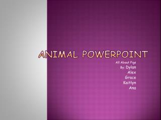 Animal Powerpoint