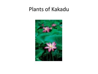 Plants of Kakadu
