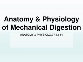 Anatomy & Physiology of Mechanical Digestion
