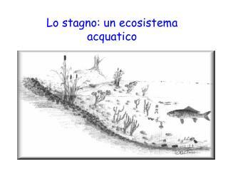 Lo stagno: un ecosistema acquatico