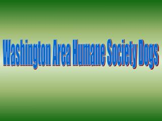 Washington Area Humane Society Dogs