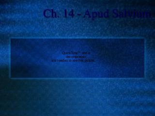 Ch. 14 - Apud Salvium
