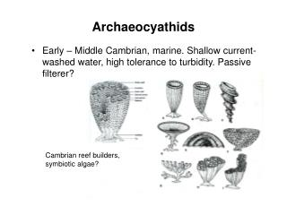 Archaeocyathids