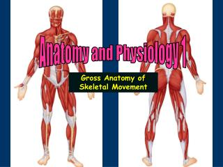 Anatomy and Physiology 1