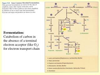 Fermentation: Catabolism of carbon in the absence of a terminal electron acceptor like O2 for electron transport chain
