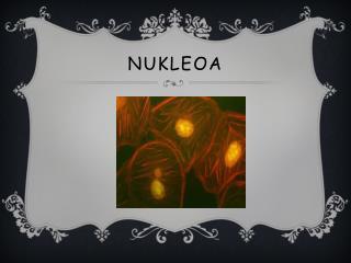 NUKLEOA