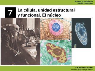 La célula, unidad estructural  y funcional. El núcleo