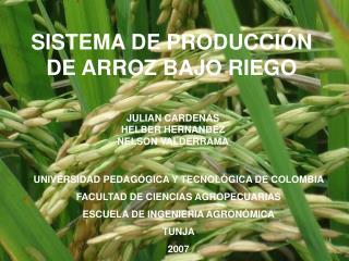 SISTEMA DE PRODUCCIÓN DE ARROZ BAJO RIEGO