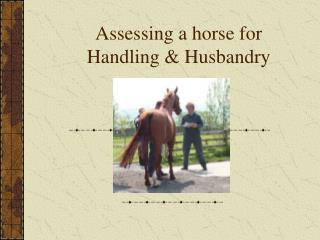 Assessing a horse for Handling & Husbandry