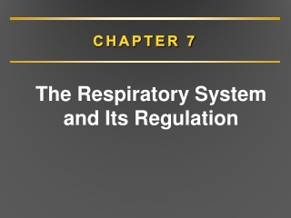 Chapter 10: Respiration  During Exercise