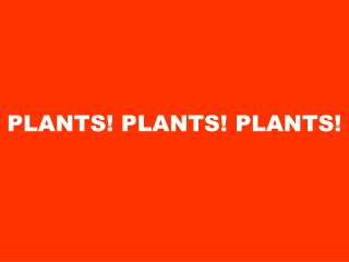 PLANTS! PLANTS! PLANTS!