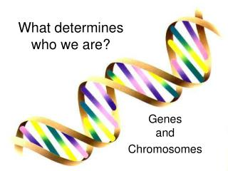 What determines  who we are?