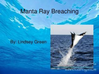 Manta Ray Breaching