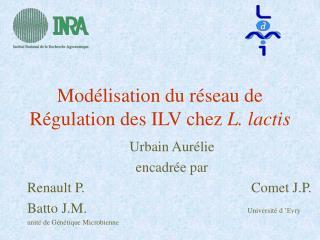 Modélisation du réseau de Régulation des ILV chez  L. lactis