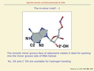 The A-minor motif - 1