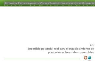2.1 Superficie potencial real para el establecimiento de plantaciones forestales comerciales