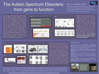 The Autism Spectrum Disorders:  from gene to function